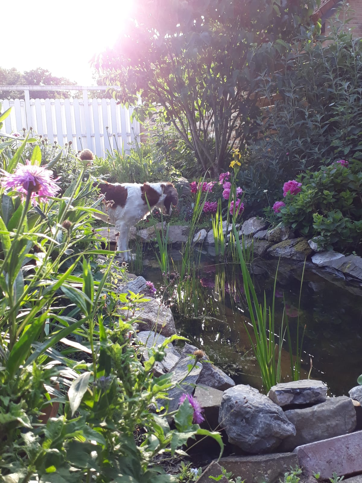 Naturnahe Gärten gestalten und Gutscheine gewinnen